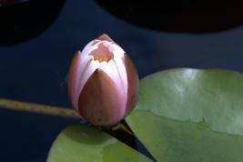 lotoabre